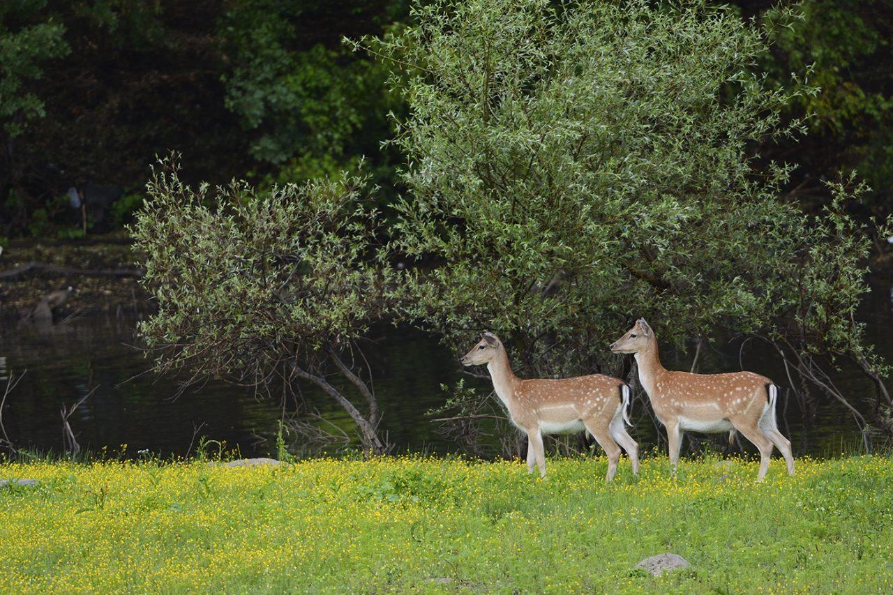 Studen Kladenets reserve,