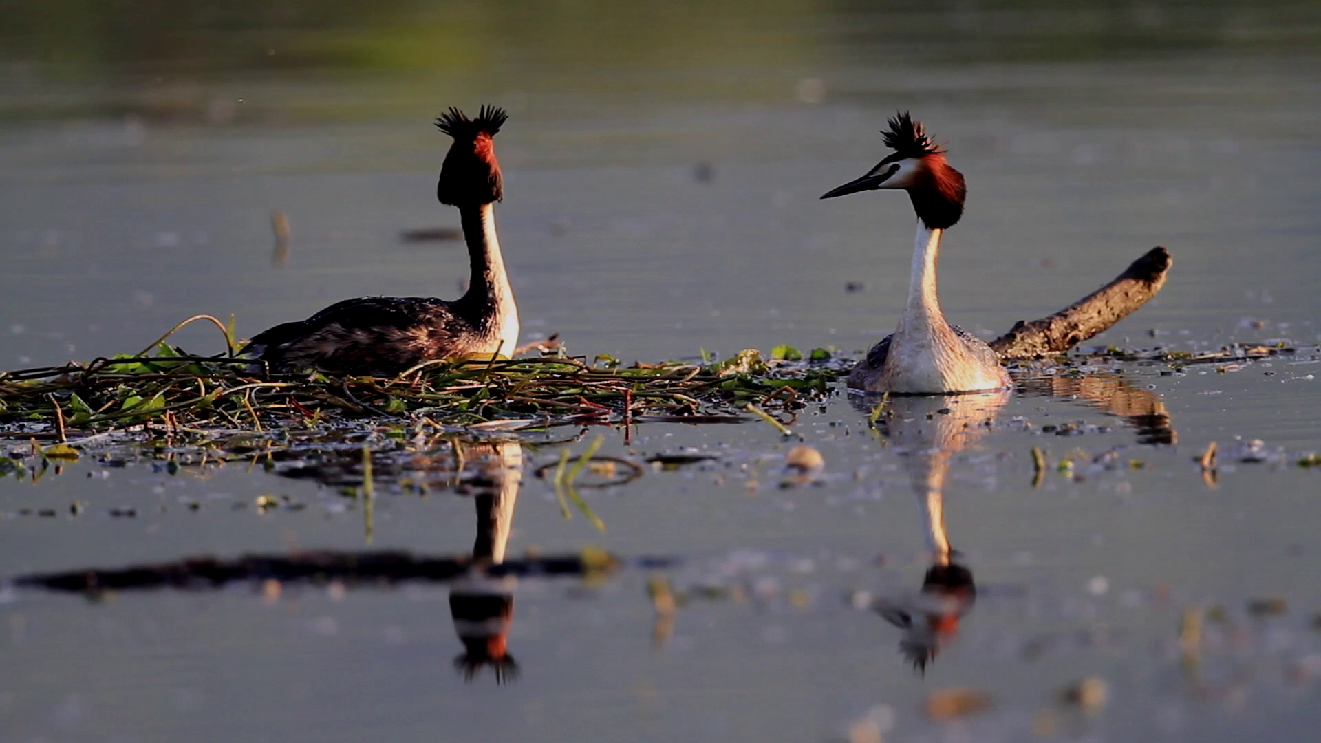 wetland birds