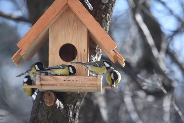 Build Your Own Birdhouse for Your Backyard Birding Hobby
